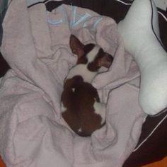 Fui un bebe muy dormilón....