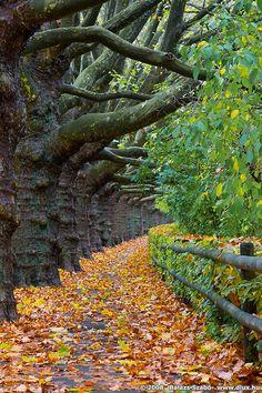 follow the path please...