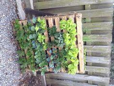 Small space vegetable garden