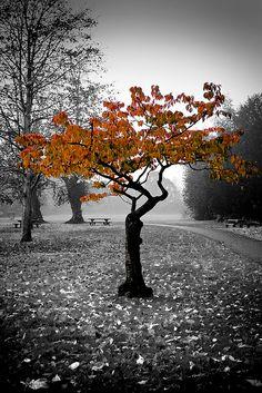 park, christmas holidays, autumn, white, color splash