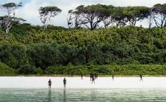 North Sentinel Island Forest
