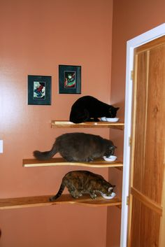 cat shelves so you can feed your cats and dogs simultaneously and the dogs won't eat the cat food
