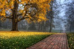 Autumn, Charlottesville, Virginia