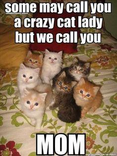 crazy cats, kitten, crazi cat, crazy cat lady, cat ladi