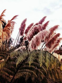 Pampas Grass http://pourlinstant.tumblr.com/#