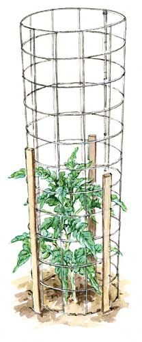 ELAYNE SEARS  Most tomatoes need tall, sturdy supports such as this one made from stiff wire normally used to reinforce concrete.    Read more: http://www.motherearthnews.com/multimedia/image-gallery.aspx?id=2147491623=2#ixzz26vpnqI4S
