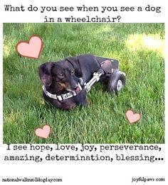 What do you see when you see a dog in a wheelchair?  joyfulpaws.com & nationalwalknrolldogday.com