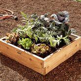 Plantagram {4-square-foot garden plans} | Williams-Sonoma