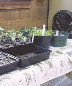 10 tips for starting plants from seed
