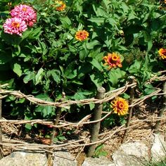 Wattle Fence DIY Tutorial for English garden accednt (Weave cut branches to create!) http://www.squidoo.com/how-to-build-a-little-wattle-fence# #wattle #fence #weave #woven #diy #tutorial #english #gardens #garden #outdoor #spaces
