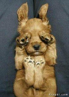 sound asleep! #dog