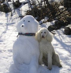 Friends...until the snow melts.