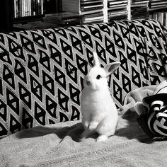 bunny goo goo by snailbooty, via Flickr