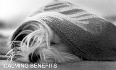 Snuggles Project - help make animal shelters look and feel more homey by knitting / crocheting up quick blankets.