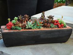 How to Start Gardening - Gardening Tips for Beginners: Use Succulents