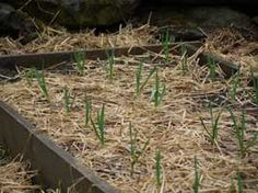 The No-Dig gardening method