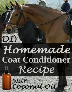 DIY Homemade Coat Conditioner Recipe | Savvy Horsewoman