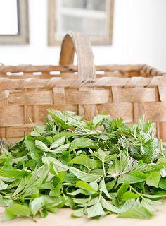 herb garden, herbs garden