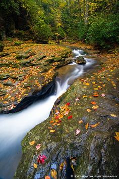 Autumn in Tuquan Creek, Lancaster County, Pennsylvania