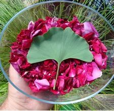 How to dry rose petals and keep their color