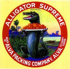 Alva, Lee County Florida Alligator Supreme Orange Citrus Fruit Crate Box Label Art Print. $9.99, via Etsy. fruit crate, orang, crate art, veget crate, crate label, florida, art prints, reptil alligatorscroc, crates