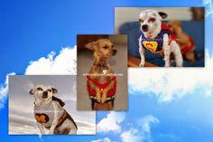 Posh Pooch Designs Dog Clothes: Super Hero Dog Sweater - Crochet Patterns