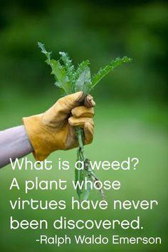 #Gardening #Garden #Gardeningquote
