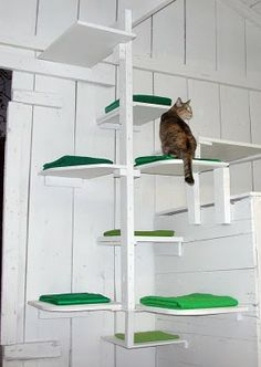 "Like Kittysville: ""Scrappy shelves in the garage. The kitty climbing steps are denoted by folded green fabric (and Natalie). The climbing tower is really clunky, but I hope it will ease some of the feral kitty traffic and squabbling when the food bowls are put under the tower.""#cats #CatStairs"