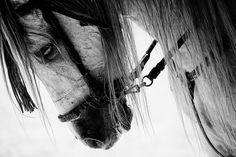 Hores / animalgazing:  untitled by javidelucar