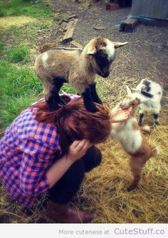 Baby goats are the cutest.