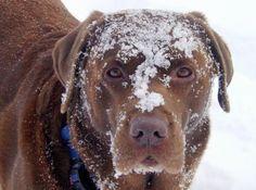 Cubbie, snow face.