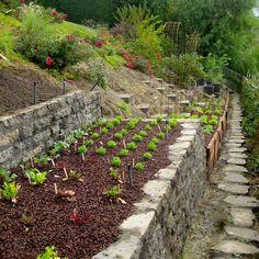 #Terraced #garden bed