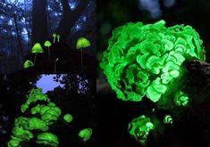 Les phénomènes incroyables et rares que la nature nous réserve