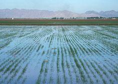 Yuma AZ - Flood irrigation