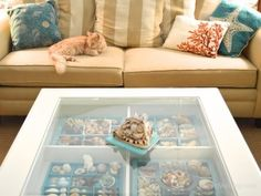 Pam's shell display table with her kitty cat Rustie