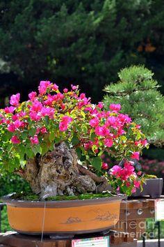 Pink Bonsai, Japan Pavilion, Epcot