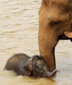 An elephant playing in the water with its mother.