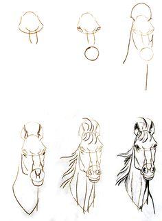 Horse Sketchbook