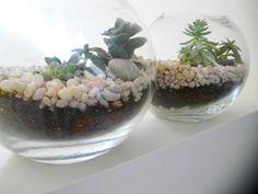Easy DIY: terrariums