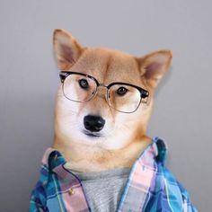 Perros modernos #freak #dogs #hipster