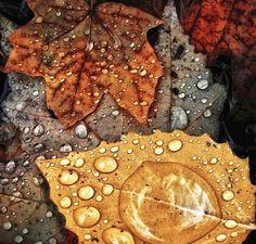Autumn Rain    ::: platinumprncss.tumblr.com