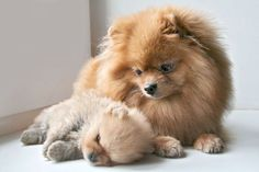 Mommy and baby poms.