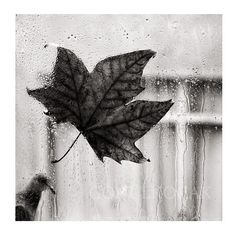 Rain photography autumn photography black and white   by gonulk