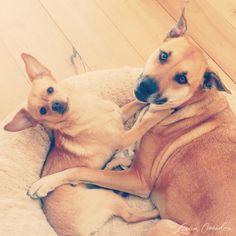 puppy love :-)