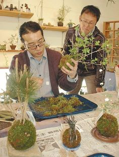 The calming art of kokedama - The Japan News