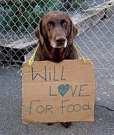 Don't Shop ... Adopt.