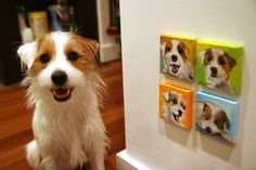 Series of 4 miniature custom paintings of YOUR DOG by PaintMyBuddy, $72.00