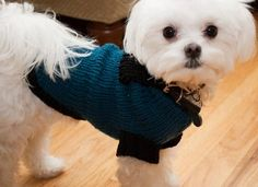 Free Pattern: Snuggie Dog Sweater