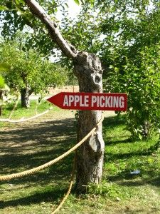 Apple Picking - yea for Fall!