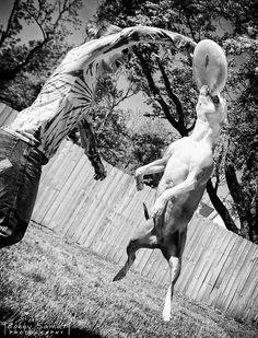 Flying Pit Bull